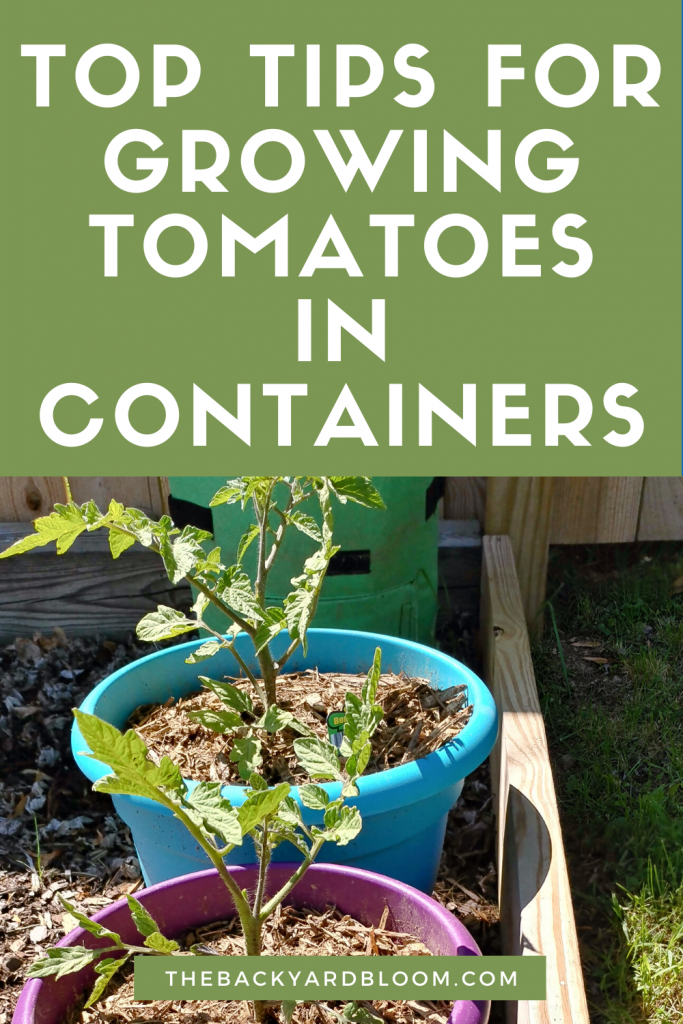 Top Tips for Growing Tomatoes in Containers