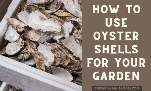 How To Use Oyster Shells For Your Garden