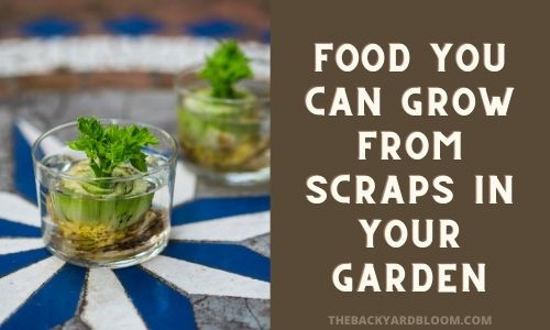 Food You Can Grow From Scraps In Your Garden