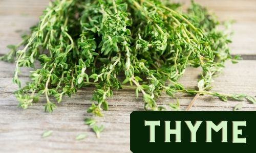 Thyme - An Easy to Grow Herb